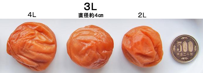 ご家庭用に2Lサイズ(直径約3.5㎝)商品のご用意もございます。 中粒サイズをご希望の方は、こちらよりご覧くださいませ。